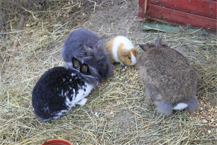 Weihnachtsgeschenke für Kaninchen und Meerschweinchen