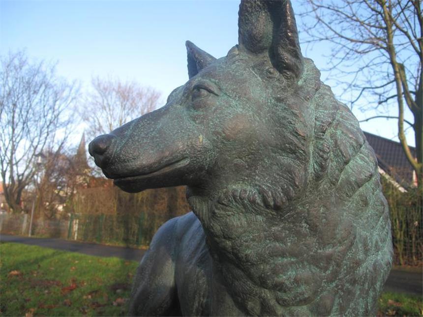 König dingo-Schwulensex