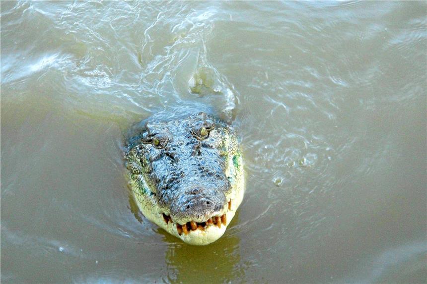 Britische Urlauberin filmt eigenen Krokodil-Angriff
