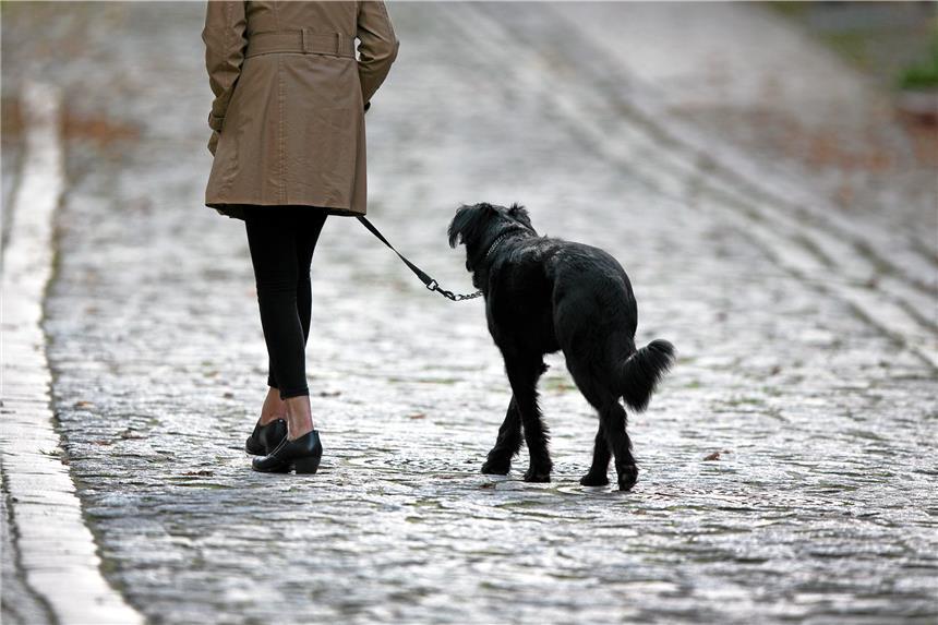 Silvester mit Hund: Tipps zur Beruhigung des Hundes