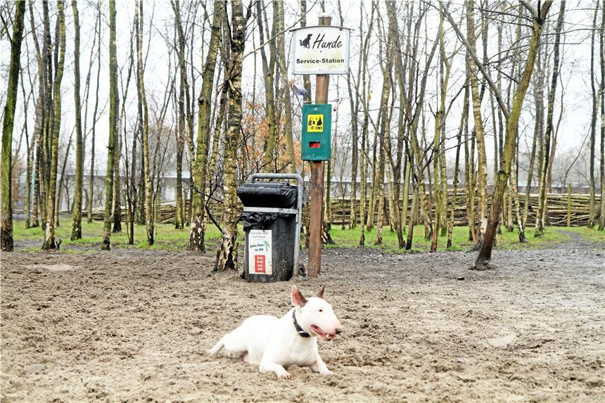 Das Problem Mit Den Hinterlassenen Hundehaufen
