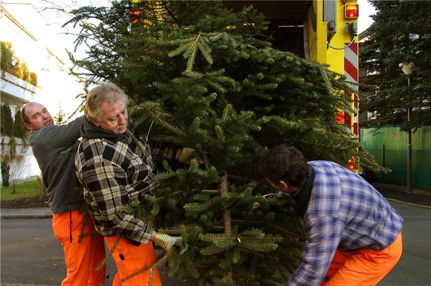Kölle Weihnachtsdeko.So Werden Sie Ihren Ausgedienten Weihnachtsbaum Los