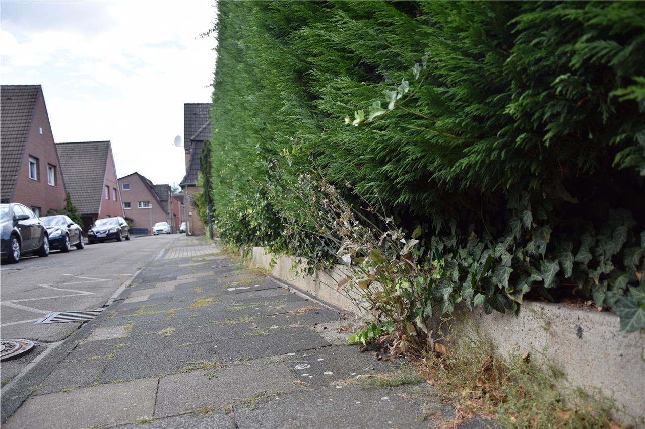 Hecken Baume Und Zaune Was Darf Ich In Meinem Eigenen Garten Und