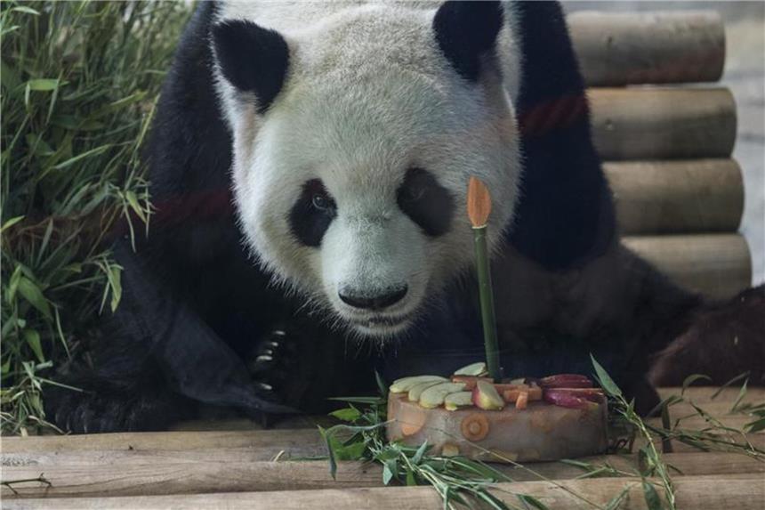 Panda Geburtstage Torten Fur Berliner Bambus Liebhaber
