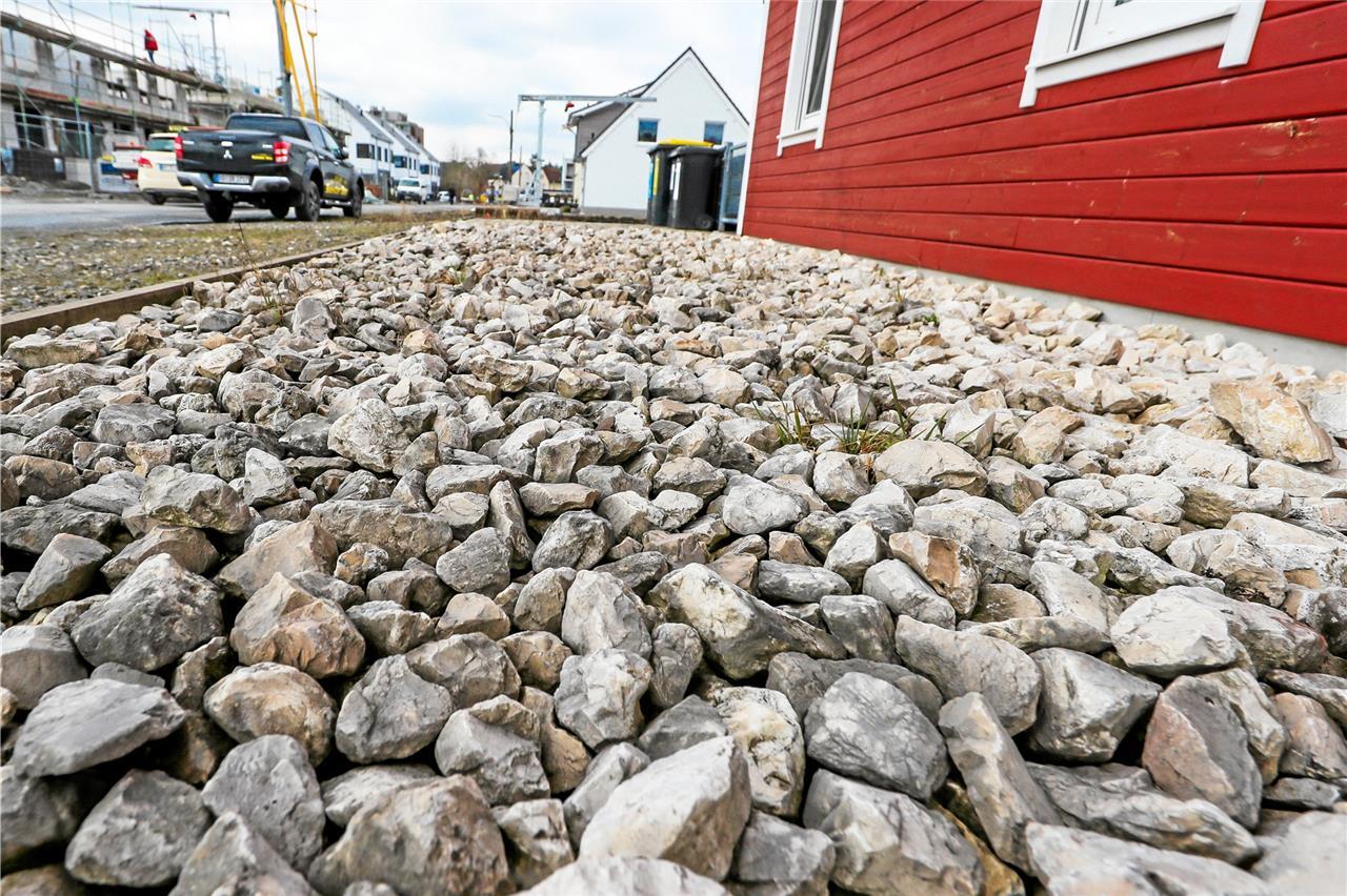 Warum Die Selmer Politik Vor Einem Verbot Von Steingärten Zurückzuckt