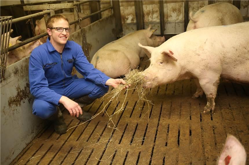 Wie Werden Schweine Getötet