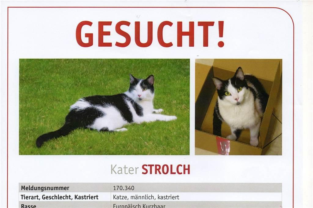 Vermisste Hunde Und Katzen Facebook Ist Die Letzte Hoffnung