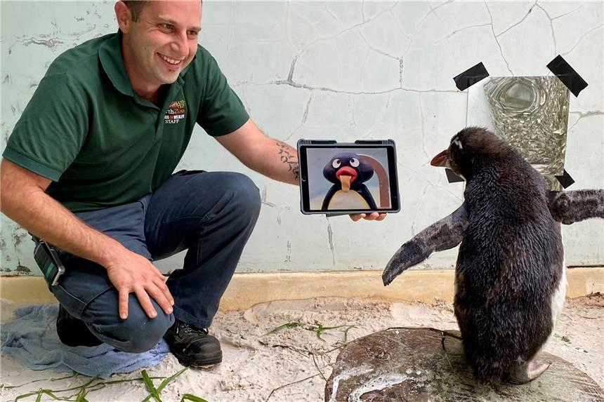 Film Mit Pinguin